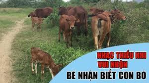 Con Bò | Bé xem Con Bò Ăn Cỏ | Nhạc Thiếu Nhi Vui Nhộn Cho Bé ...