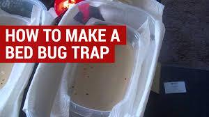 bed bug trap using sugar