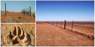 The Dingo Fence In Australia The Longest Fence And One Of The Longest Structures In The World