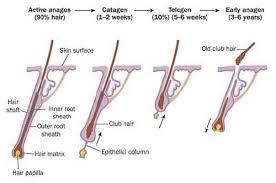 hair loss alopecia causes symptoms