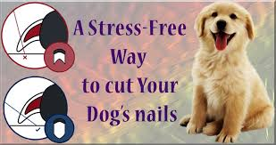 how to cut dog nails a stress free way