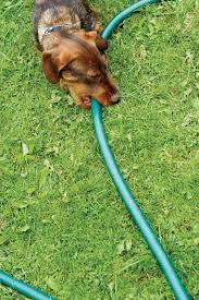 Can Dogs Live Outside In All Seasons Dog Behavior Animal Planet