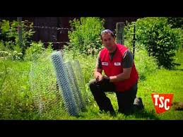 How To Keep Deer Birds Rabbits And Insects Out Of Your Garden Youtube
