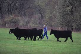 Beef Production For Small Farms An Overview Osu Extension Catalog Oregon State University
