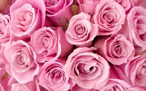 64 roses screensaver wallpapers on