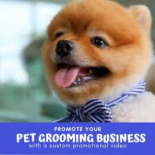 Create a dog grooming service promo video by Ladaire