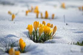 Image result for winter/spring photos