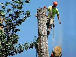 The Possible Advantages of Tree Treatment Services