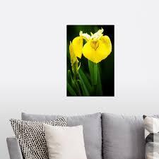 Yellow Flag Iris Flowers Iris Sp Wall Decal Ebay