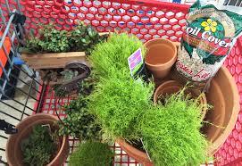 diy make your own fairy garden