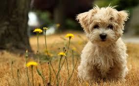 cute puppy wallpaper 2880x1800 4180