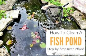 easy diy fish pond cleaning