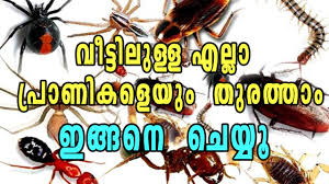 45+ Termite In Malayalam Background