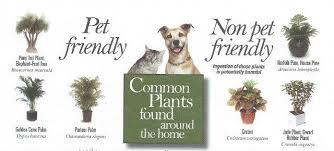indoor plants pet friendly
