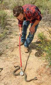 Expect Snake Sightings To Jump In Orange County This Summer Specialist Says Orange County Register