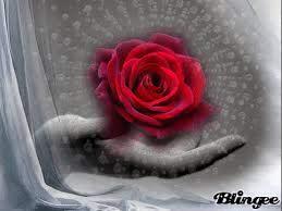 Гифка роза гиф картинка, скачать анимированный gif на GIFER