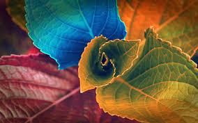 مدونة خلفيات Hd ألوان أوراق