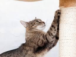 cat is a destructive scratcher
