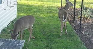 Plastic Deer Fence What Is Deer Fence Deer Fence Usa