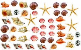 Amazon Com Wall Sticker Small Seashells And Starfish Colorful Removable And Repositionable 47pcs Love Ocean Inspired Motivational Cute Wall Vinyl Art Wall Decor Sticker Decal Baby