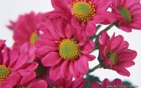 free pretty flower pictures wallpaper