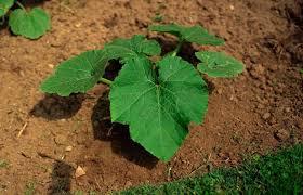 preparing clay soil for gardening
