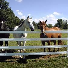 Off White Bright 425 Flex Fence Scratch Dent Ramm Horse Fencing Stalls