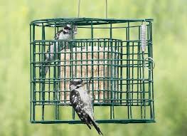Best Bird Feeders 10 Favorites For Your Yard Bob Vila