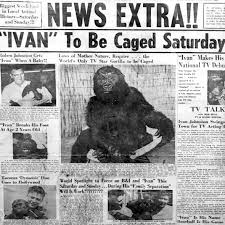 The tragedy of Ivan, the 'shopping mall gorilla' who drove America wild