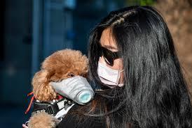 """24zampe   Coronavirus, cane positivo al test ma """"non c'è rischio ..."""
