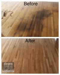 View Wood Floor Damage Termites Images