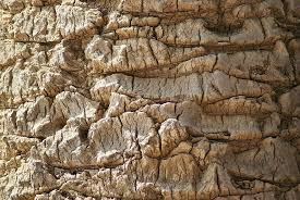 Palm Tree Wood Nature Tree Bark Texture Natural Tropical Pikist