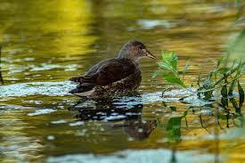 water, nature, bird, duck, animals, summer, the background | Pikist