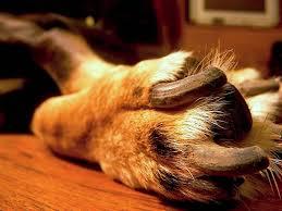 treating your dog s broken nail