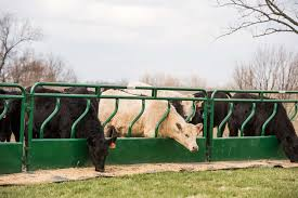 Cattle Fence Line Feeder Panels With Hay Saver Tarter Farm And Ranch Equipment American Made Quality Since 1945
