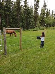Big Prairie Store Electrobraid Horse Fence Posts Facebook