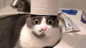 اجمل فيديو مضحك عن القطط لم يسبق له مثيل الصور Tier3 Xyz