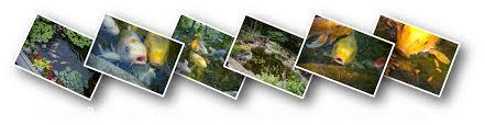 ohio pond installation maintenance