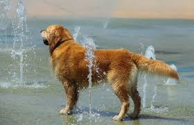 splash pad fun for your dogs and kids