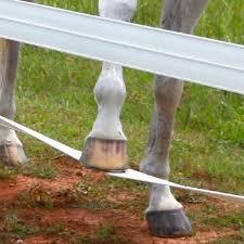Cenflex 5 In X 660 Ft White Flexible Rail Horse Fence 381050 The Home Depot