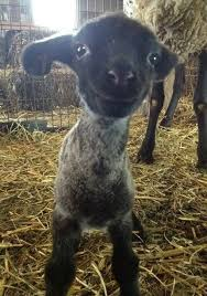 the happiest animals in the entire world happy animals cute