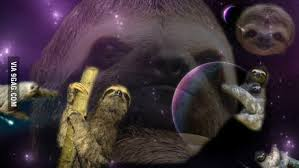 googled for a sloth wallpaper 9