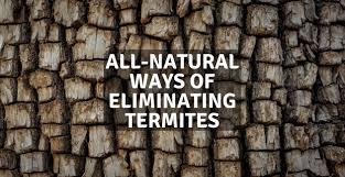 43+ Termite Eradication Methods Background