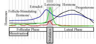 e.hormone | The Hormones : Progestins