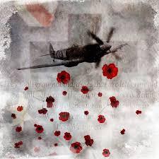 remembrance poppy poppy poppies remembrance veterns day