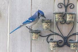 Repurpose An Old Metal And Glass Wall Hung Candle Holder Into A Bird Feeder Love It Fence Decor Bird Feeders Bird