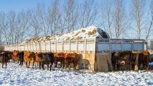 1600sq Ft Custom Cattle Feeder Youtube