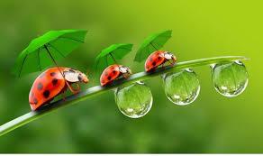 awesome ladybug wallpaper hd wallpaper