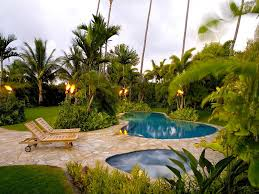 backyard palm tree landscaping