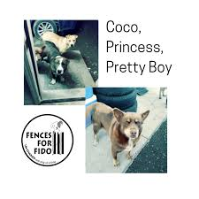 Fences For Fido Coco Princess And Pretty Boy Live In Facebook